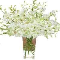 Deliver Orchid Flowers to India