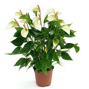 Send Online Flowers to Delhi