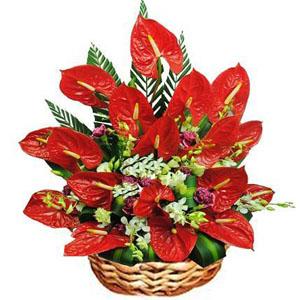 Bird of Paradise Flowers to India