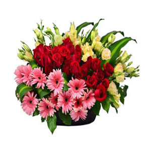 Deliver holi Flowers in India