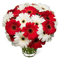 Online Best Flowers to India : Red White Gerbera