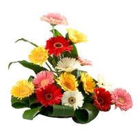 Send Flowers to India : Mixed Gerbera