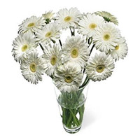 Online Flower Delivery in India - White Gerbera