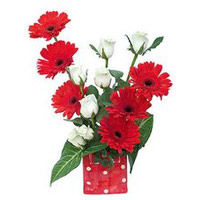 Send Flowers to India : Red Gerbera White Roses