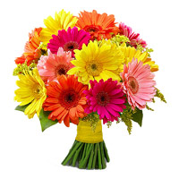Valentine Flowers to India : Mix Gerbera Bouquet