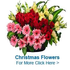 Christmas Flowers to India