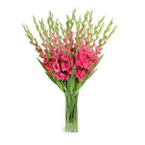 Deliver Christmas Flowers to India