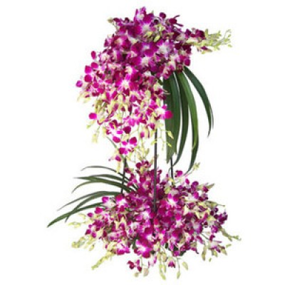 Orchid Flowers to India